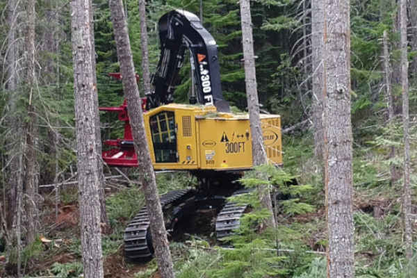 Weiller-B458 Buncher in the Forest